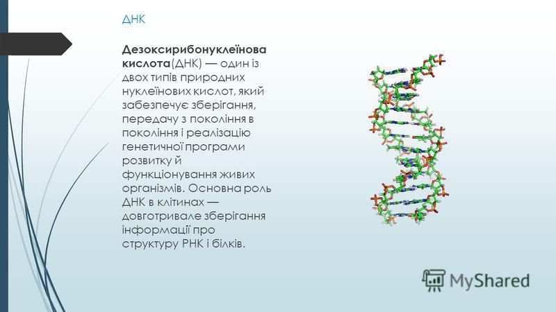 ДНК Дезоксирибонуклеїнова кислота (ДНК) один із двох типів природних нуклеїнових кислот, який забезпечує зберігання, передачу з покоління в покоління і реалізацію генетичної програми розвитку й функціонування живих організмів. Основна роль ДНК в кліт