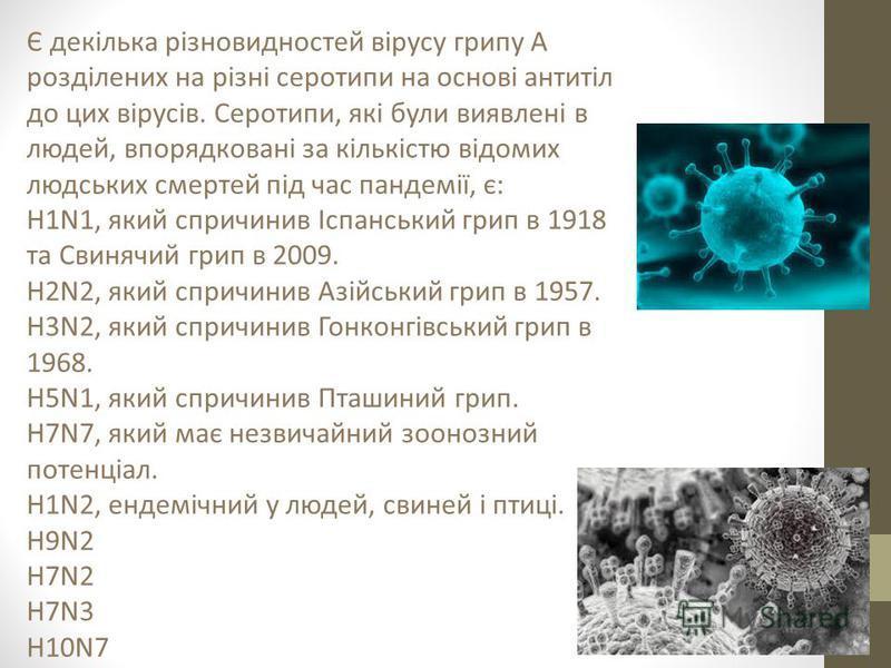 Є декілька різновидностей вірусу грипу А розділених на різні серотипи на основі антитіл до цих вірусів. Серотипи, які були виявлені в людей, впорядковані за кількістю відомих людських смертей під час пандемії, є: H1N1, який спричинив Іспанський грип