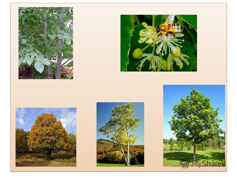 Рослинний світ. Переважають соснові, дубово-соснові та дубово-грабові ліси. Є значні ділянки дубово-липових, вільхово-березових і ясенево-вільхових лісів. У лісах чітко виділяється ярусність. Верхній ярус утворюють дерева, середній, підлісок, кущі, н
