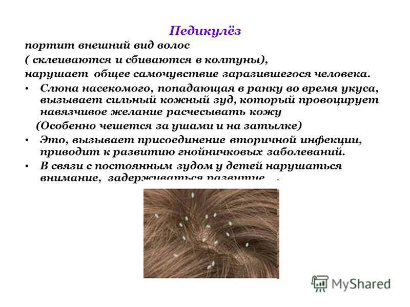 Педикулёз портит внешний вид волос ( склеиваются и сбиваются в колтуны), нарушает общее самочувствие заразившегося человека. Слюна насекомого, попадающая в ранку во время укуса, вызывает сильный кожный зуд, который провоцирует навязчивое желание расч