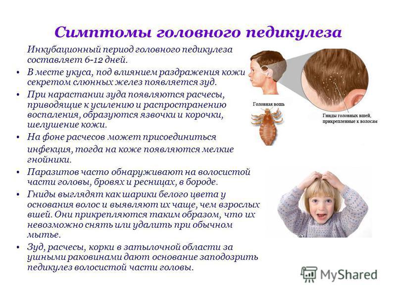 Симптомы головного педикулеза Инкубационный период головного педикулеза составляет 6-12 дней. В месте укуса, под влиянием раздражения кожи секретом слюнных желез появляется зуд. При нарастании зуда появляются расчесы, приводящие к усилению и распрост
