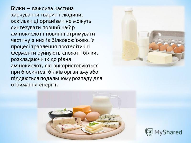 Білки важлива частина харчування тварин і людини, оскільки ці організми не можуть синтезувати повний набір амінокислот і повинні отримувати частину з них із білковою їжею. У процесі травлення протелітичні ферменти руйнують спожиті білки, розкладаючи