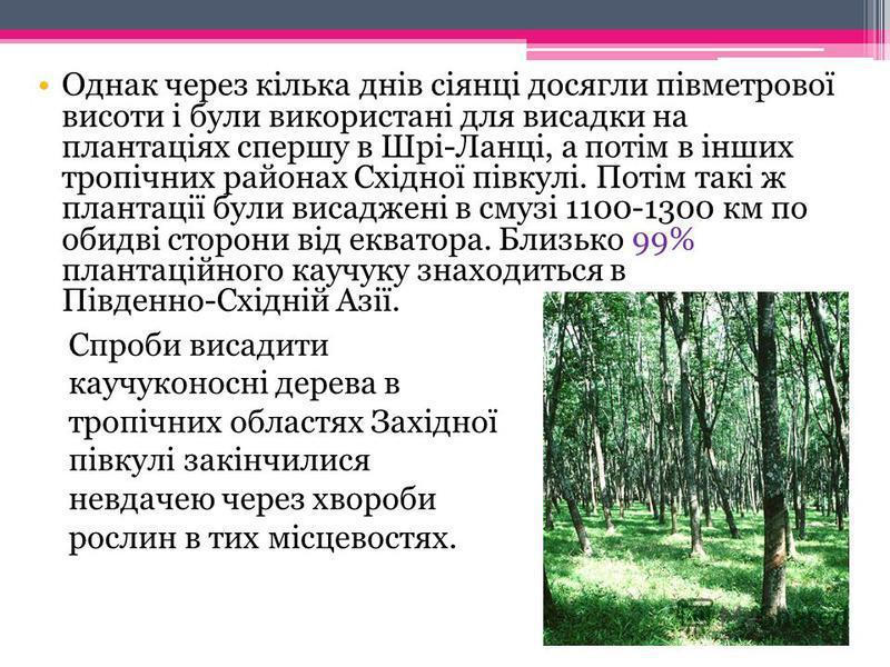 Бразилія була володаркою величезних плантацій гевеї. Щоб зберегти їх,уряд Бразилії видав закон, що забороняє під страхом смерті вивіз насіння і молодих дерев гевеї. Але було пізно. За порадою ботаніка Дж. Гукера, англієць Генрі Вікгем поїхав у 1876 р
