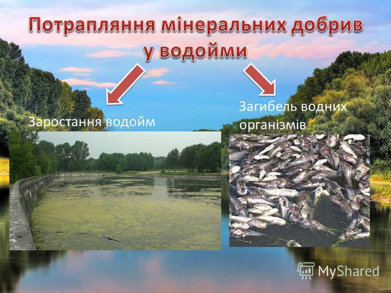 Заростання водойм Загибель водних організмів
