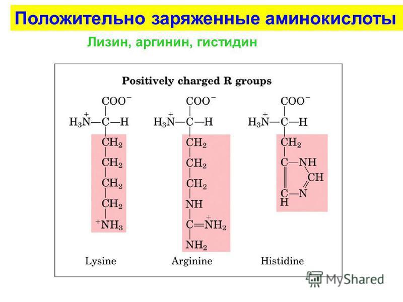 Положительно заряженные аминокислоты Лизин, аргинин, гистидин