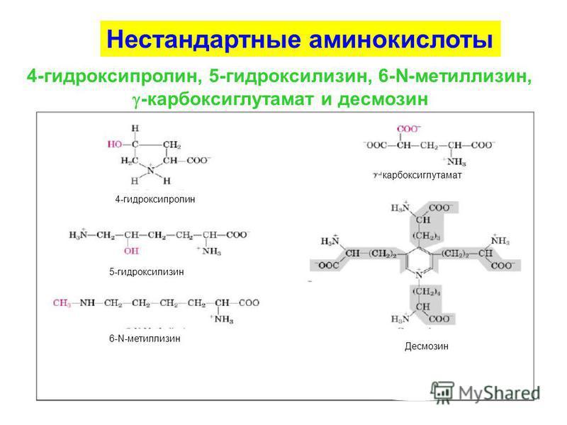 Нестандартные аминокислоты 4-гидроксипролин, 5-гидроксилизин, 6-N-метиллизин, -карбоксиглутамат и десмозин 4-гидроксипролин карбоксиглутамат 5-гидроксилизин 6-N-метиллизин Десмозин
