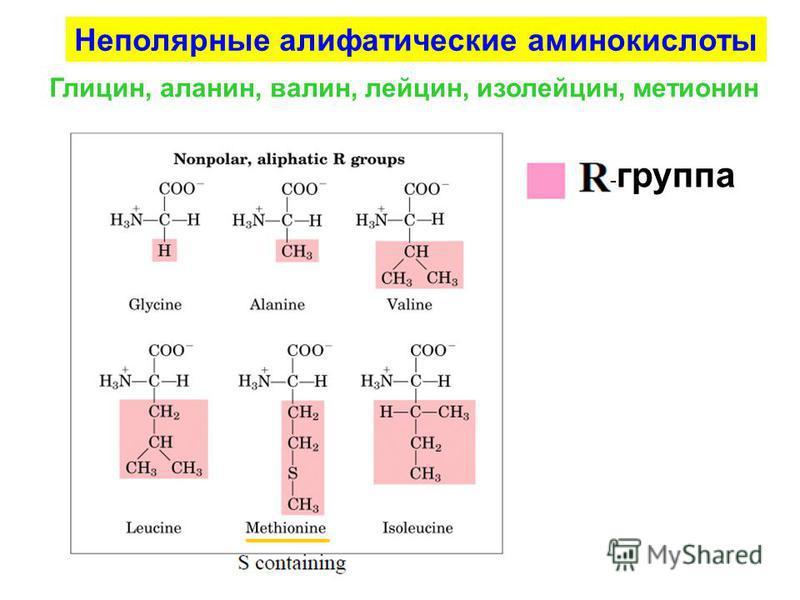 - группа Неполярные алифатические аминокислоты Глицин, аланин, валин, лейцин, изолейцин, метионин