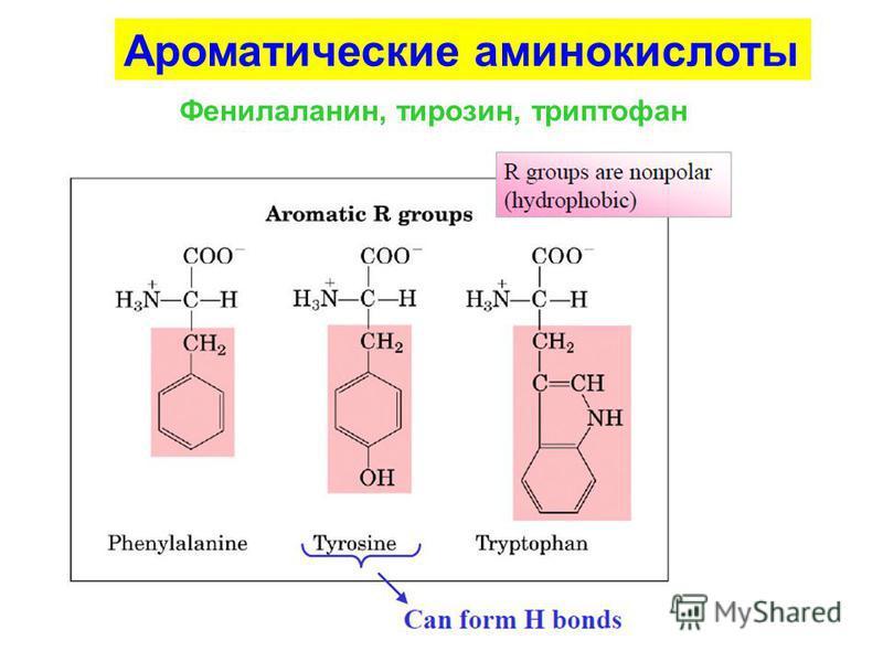 Ароматические аминокислоты Фенилаланин, тирозин, триптофан