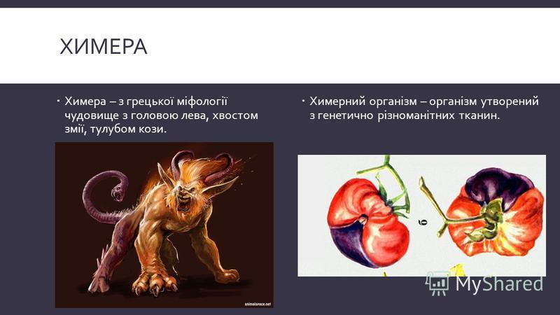 ХИМЕРА Химера – з грецької міфології чудовище з головою лева, хвостом змії, тулубом кози. Химерний організм – організм утворений з генетично різноманітних тканин.