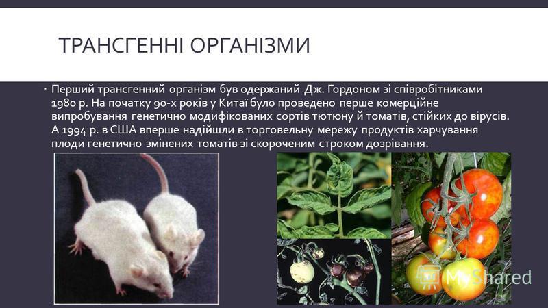ТРАНСГЕННІ ОРГАНІЗМИ Перший трансгенний організм був одержаний Дж. Гордоном зі співробітниками 1980 р. На початку 90-х років у Китаї було проведено перше комерційне випробування генетично модифікованих сортів тютюну й томатів, стійких до вірусів. А 1