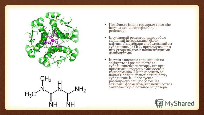 Подібно до інших гормонам свою дію інсулін здійснює через білок - рецептор. Інсуліновий рецептор являє собою складний інтегральний білок клітинної мембрани, побудований з 2 субодиниць ( a і b ), причому кожна з них утворена двома поліпептидними ланцю