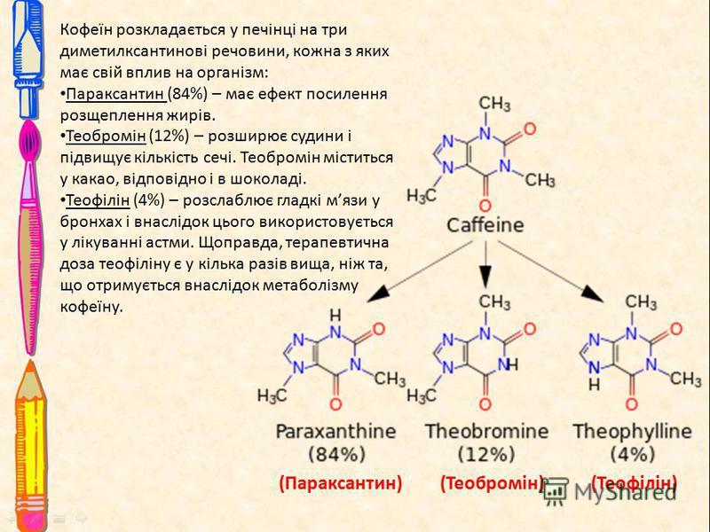 Кофеїн розкладається у печінці на три диметилксантинові речовини, кожна з яких має свій вплив на організм: Параксантин (84%) – має ефект посилення розщеплення жирів. Теобромін (12%) – розширює судини і підвищує кількість сечі. Теобромін міститься у к