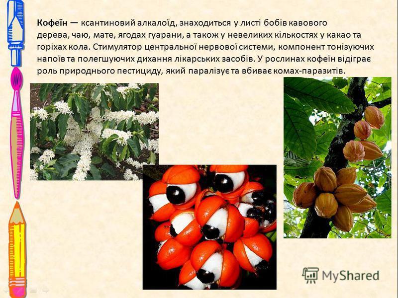 Кофеїн ксантиновий алкалоїд, знаходиться у листі бобів кавового дерева, чаю, мате, ягодах гуарани, а також у невеликих кількостях у какао та горіхах кола. Стимулятор центральної нервової системи, компонент тонізуючих напоїв та полегшуючих дихання лік