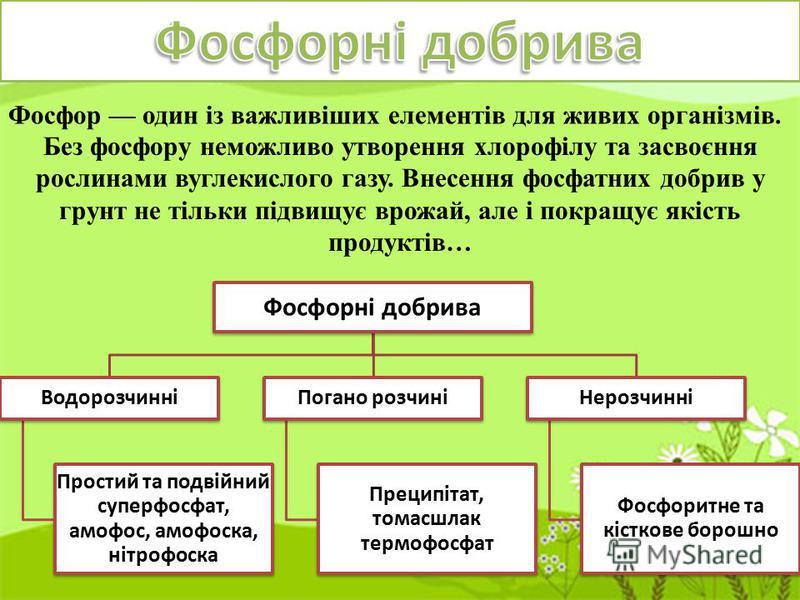 Фосфор один із важливіших елементів для живих організмів. Без фосфору неможливо утворення хлорофілу та засвоєння рослинами вуглекислого газу. Внесення фосфатних добрив у грунт не тільки підвищує врожай, але і покращує якість продуктів… Фосфорні добри