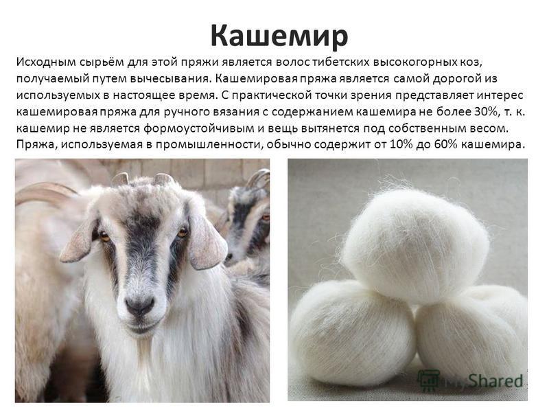 Кашемир Исходным сырьём для этой пряжи является волос тибетских высокогорных коз, получаемый путем вычесывания. Кашемировая пряжа является самой дорогой из используемых в настоящее время. С практической точки зрения представляет интерес кашемировая п
