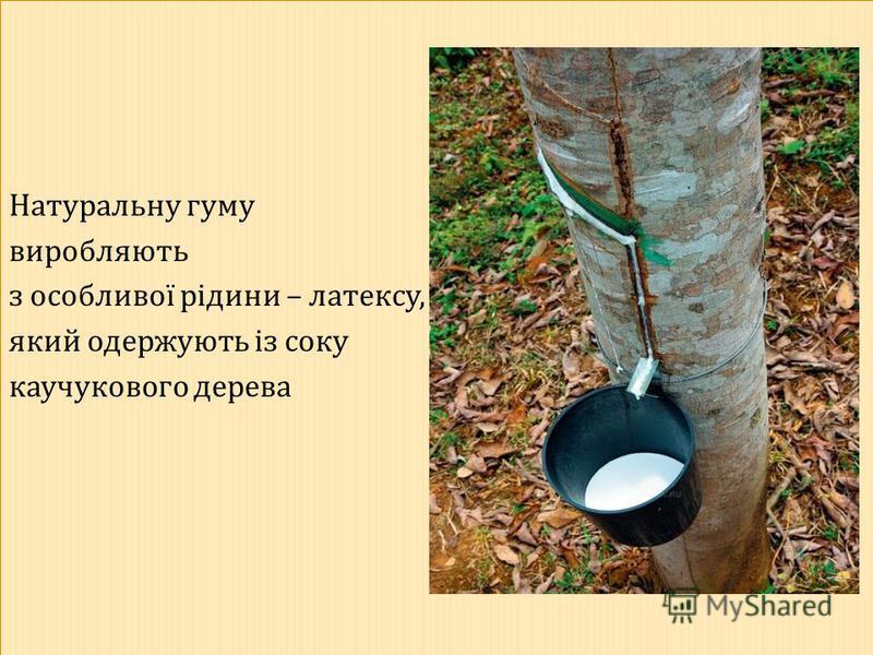 Натуральну гуму виробляють з особливої рідини – латексу, який одержують із соку каучукового дерева Натуральну гуму виробляють з особливої рідини – латексу, який одержують із соку каучукового дерева