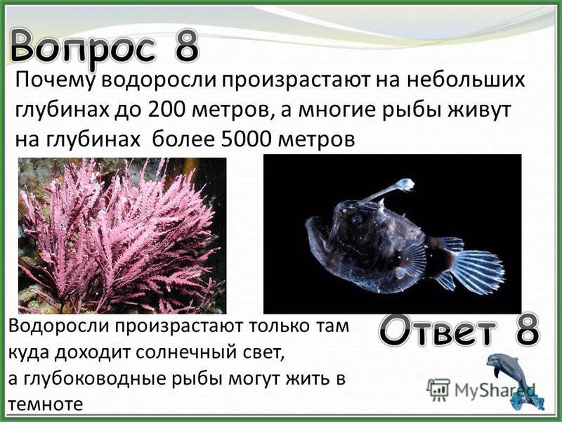 Почему водоросли произрастают на небольших глубинах до 200 метров, а многие рыбы живут на глубинах более 5000 метров Водоросли произрастают только там куда доходит солнечный свет, а глубоководные рыбы могут жить в темноте