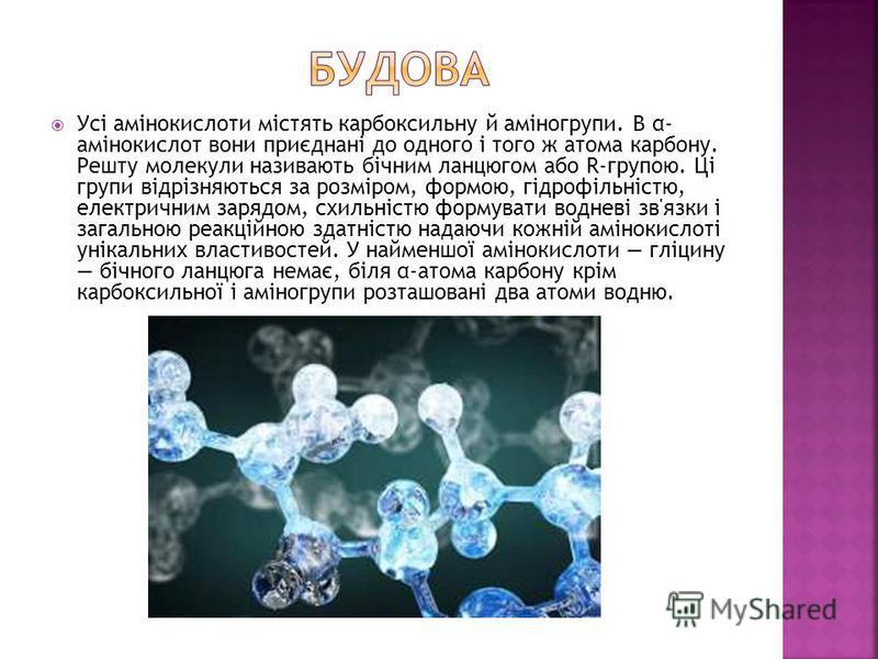 Усі амінокислоти містять карбоксильну й аміногрупи. В α- амінокислот вони приєднані до одного і того ж атома карбону. Решту молекули називають бічним ланцюгом або R-групою. Ці групи відрізняються за розміром, формою, гідрофільністю, електричним заряд