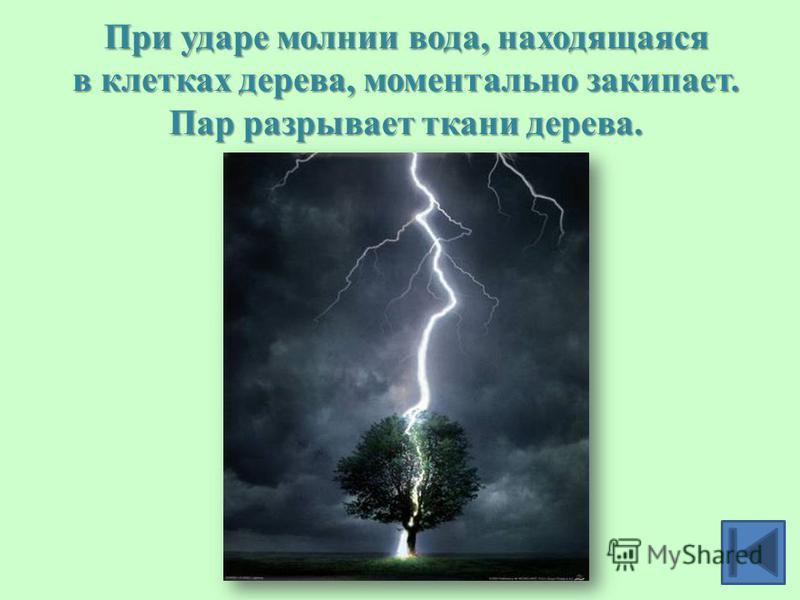 При ударе молнии вода, находящаяся в клетках дерева, моментально закипает. Пар разрывает ткани дерева.