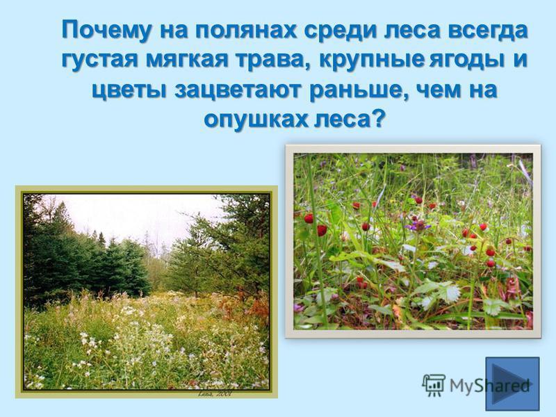 Почему на полянах среди леса всегда густая мягкая трава, крупные ягоды и цветы зацветают раньше, чем на опушках леса?
