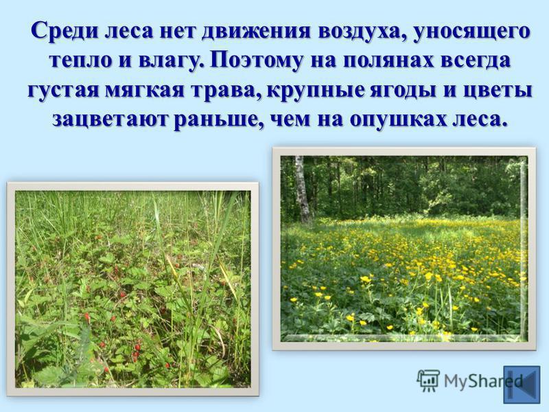 Среди леса нет движения воздуха, уносящего тепло и влагу. Поэтому на полянах всегда густая мягкая трава, крупные ягоды и цветы зацветают раньше, чем на опушках леса.