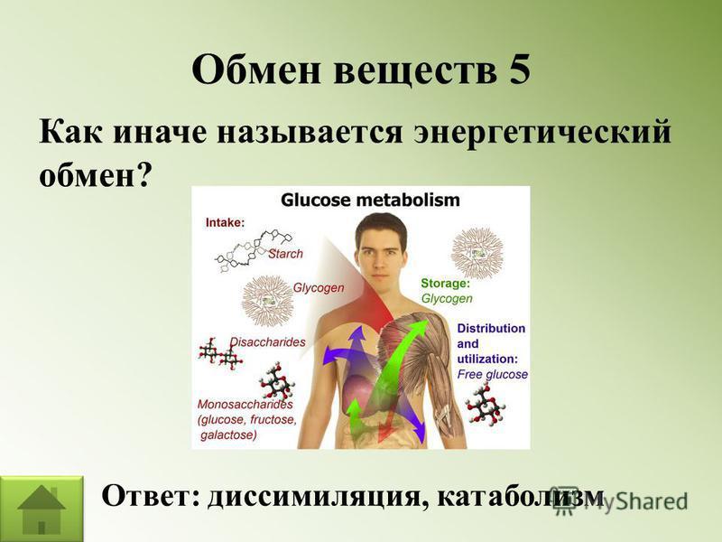 Обмен веществ 5 Как иначе называется энергетический обмен? Ответ: диссимиляция, катаболизм