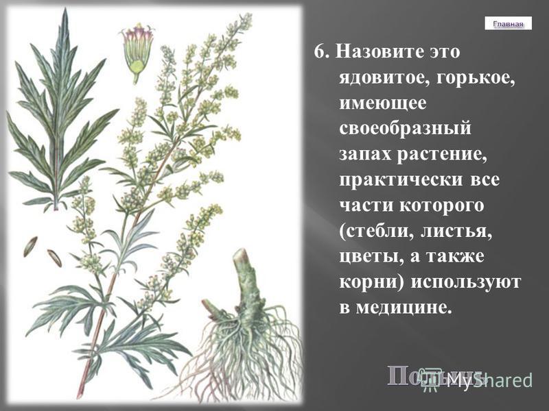 6. Назовите это ядовитое, горькое, имеющее своеобразный запах растение, практически все части которого ( стебли, листья, цветы, а также корни ) используют в медицине.