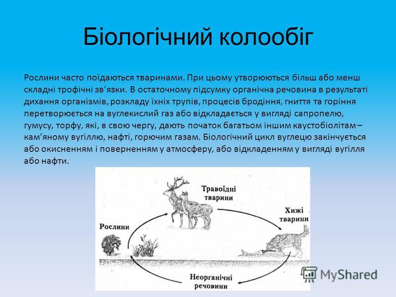 Біологічний колообіг Рослини часто поїдаються тваринами. При цьому утворюються більш або менш складні трофічні звязки. В остаточному підсумку органічна речовина в результаті дихання організмів, розкладу їхніх трупів, процесів бродіння, гниття та горі