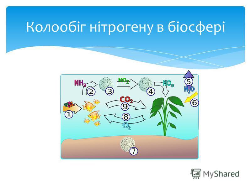 Колообіг нітрогену в біосфері