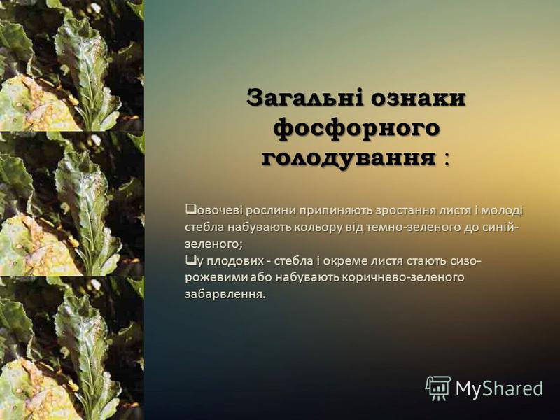 Загальні ознаки фосфорного голодування : овочеві рослини припиняють зростання листя і молоді стебла набувають кольору від темно-зеленого до синій- зеленого; овочеві рослини припиняють зростання листя і молоді стебла набувають кольору від темно-зелено
