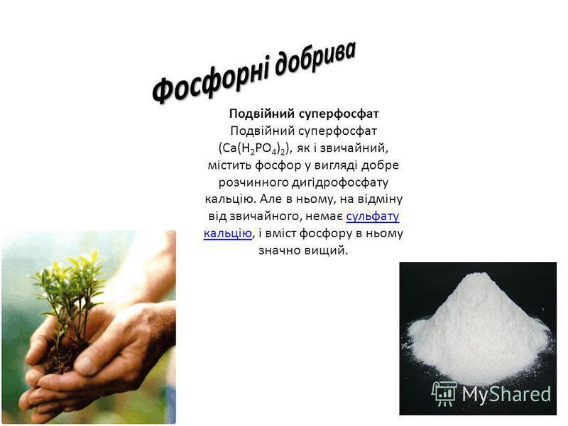 Подвійний суперфосфат Подвійний суперфосфат (Ca(Н 2 РО 4 ) 2 ), як і звичайний, містить фосфор у вигляді добре розчинного дигідрофосфату кальцію. Але в ньому, на відміну від звичайного, немає сульфату кальцію, і вміст фосфору в ньому значно вищий.сул