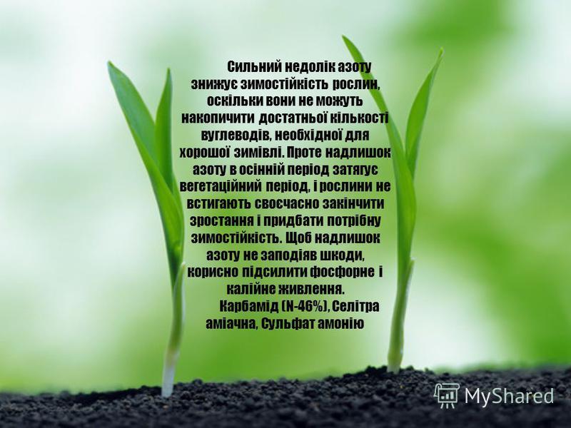 Сильний недолік азоту знижує зимостійкість рослин, оскільки вони не можуть накопичити достатньої кількості вуглеводів, необхідної для хорошої зимівлі. Проте надлишок азоту в осінній період затягує вегетаційний період, і рослини не встигають своєчасно