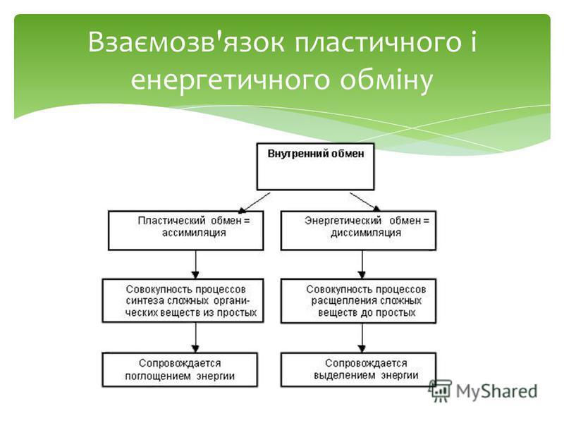 Взаємозв'язок пластичного і енергетичного обміну
