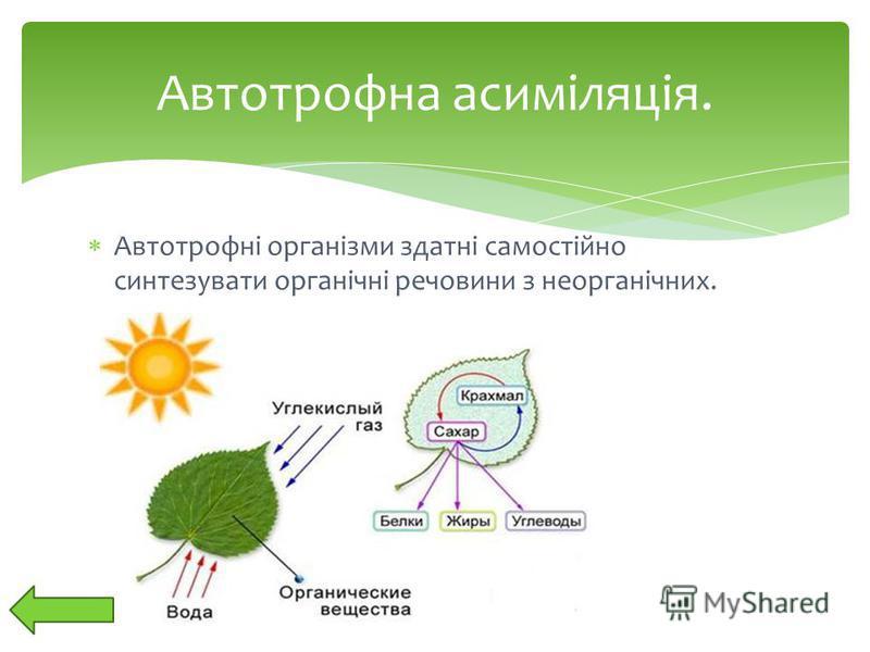 Автотрофні організми здатні самостійно синтезувати органічні речовини з неорганічних. Автотрофна асиміляція.