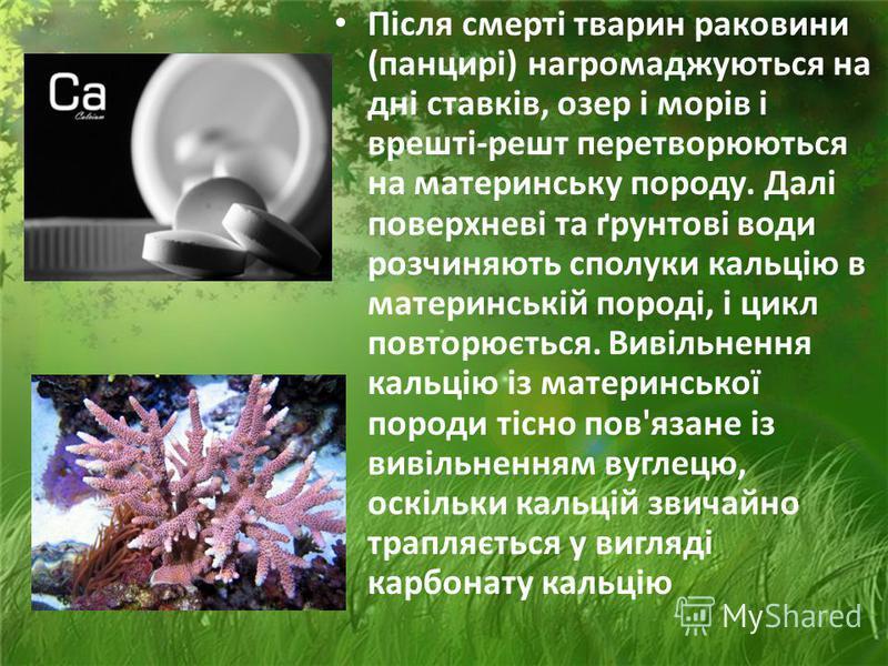 Багато порід містять кальцій, який у розчиненому вигляді надходить до рослин за допомогою коріння. Тварини його одержують під час водопою чи їди, згодом кальцій повертається до ґрунту при розкладі мертвих організмів. Кальцій входить до складу скелеті