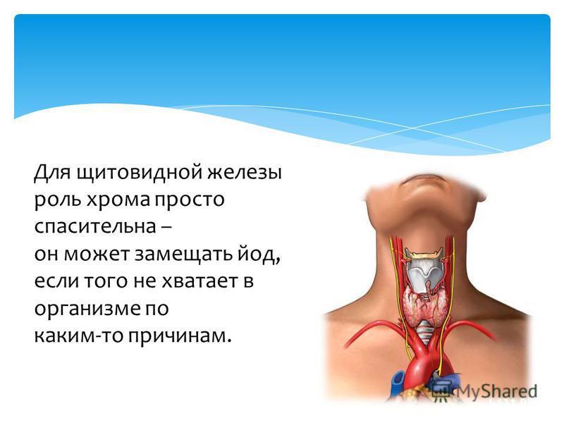 Для щитовидной железы роль хрома просто спасительна – он может замещать йод, если того не хватает в организме по каким-то причинам.