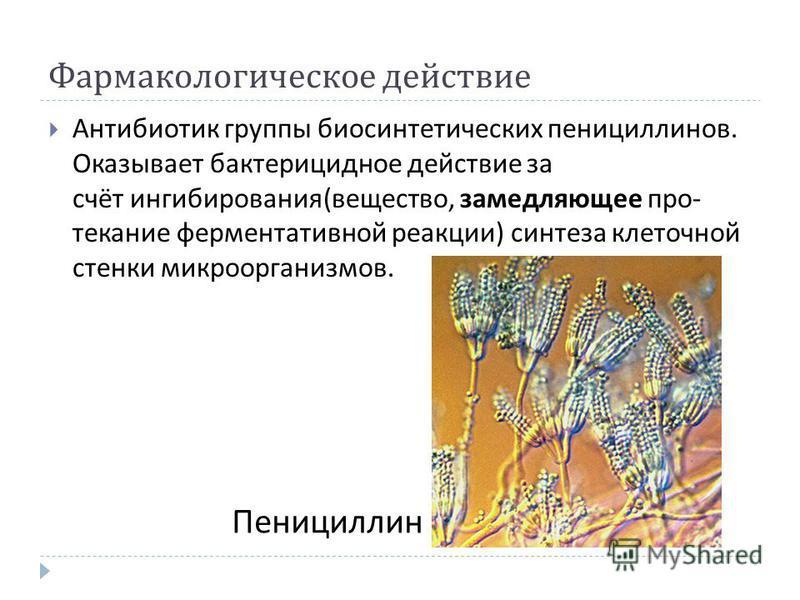 Фармакологическое действие Антибиотик группы биосинтетических пенициллинов. Оказывает бактерицидное действие за счёт ингибирования ( вещество, замедляющее протекание ферментативной реакции ) синтеза клеточной стенки микроорганизмов. Пенициллин