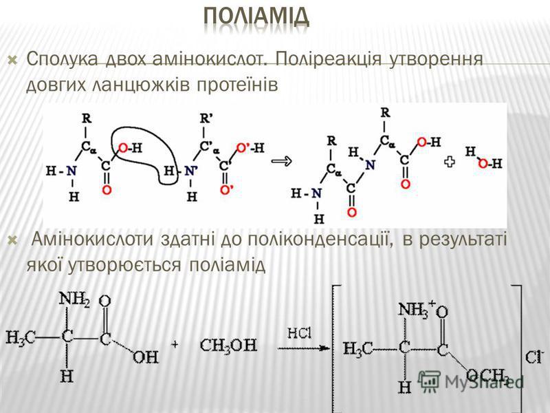 Сполука двох амінокислот. Поліреакція утворення довгих ланцюжків протеїнів Амінокислоти здатні до поліконденсації, в результаті якої утворюється поліамід