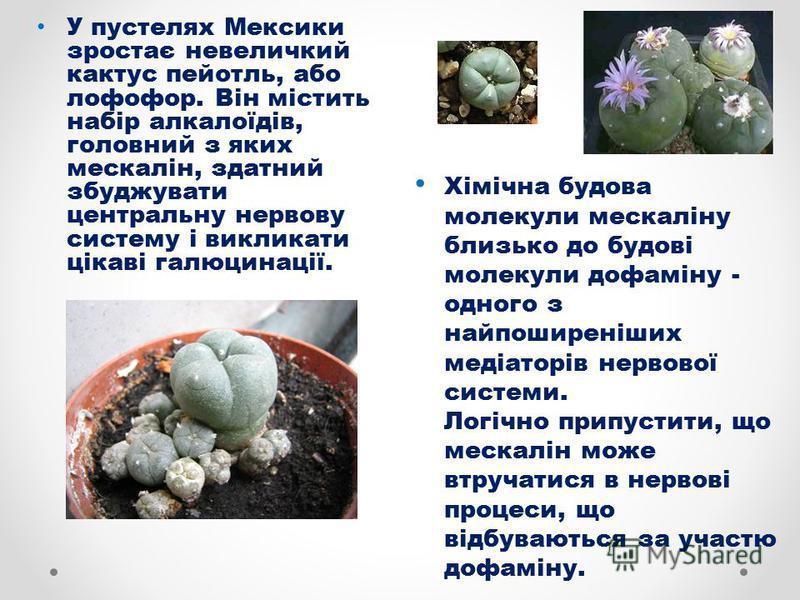 У пустелях Мексики зростає невеличкий кактус пейотль, або лофофор. Він містить набір алкалоїдів, головний з яких мескалін, здатний збуджувати центральну нервову систему і викликати цікаві галюцинації. Хімічна будова молекули мескаліну близько до будо