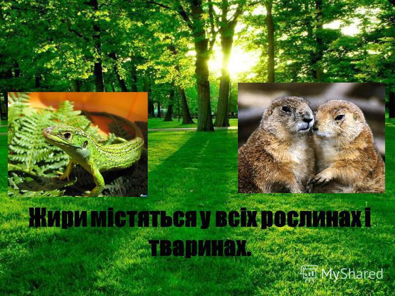 Жири містяться у всіх рослинах і тваринах.