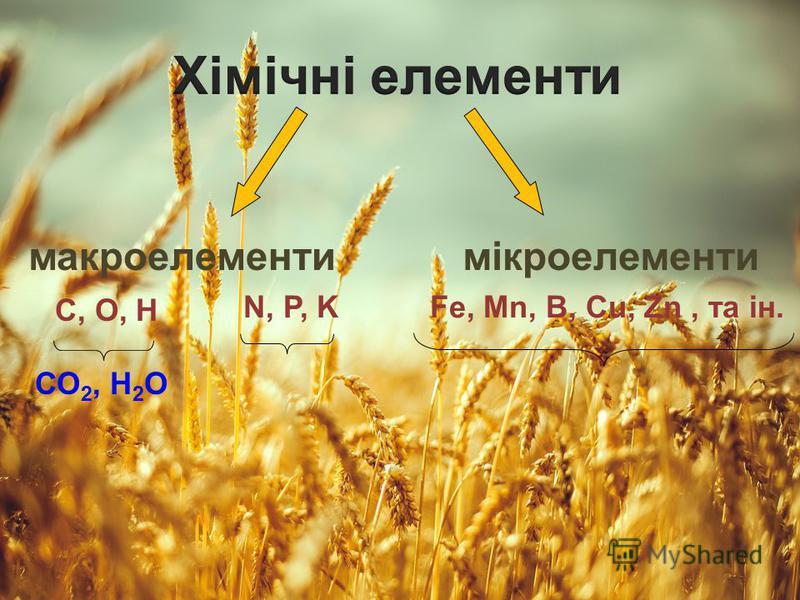 макроелементимікроелементи С, О, Н N, P, KFe, Mn, B, Cu, Zn, та ін. СО 2, Н 2 О