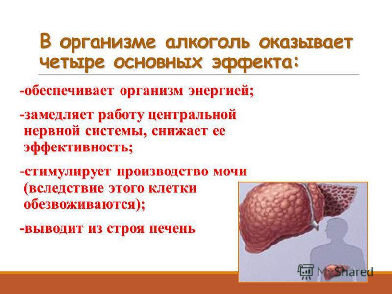 В организме алкоголь оказывает четыре основных эффекта: обеспечивает организм энергией; -обеспечивает организм энергией; -замедляет работу центральной нервной системы, снижает ее эффективность; -стимулирует производство мочи (вследствие этого клетки