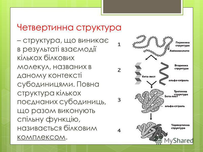 Четвертинна структура – структура, що виникає в результаті взаємодії кількох білкових молекул, названих в даному контексті субодиницями. Повна структура кількох поєднаних субодиниць, що разом виконують спільну функцію, називається білковим комплексом