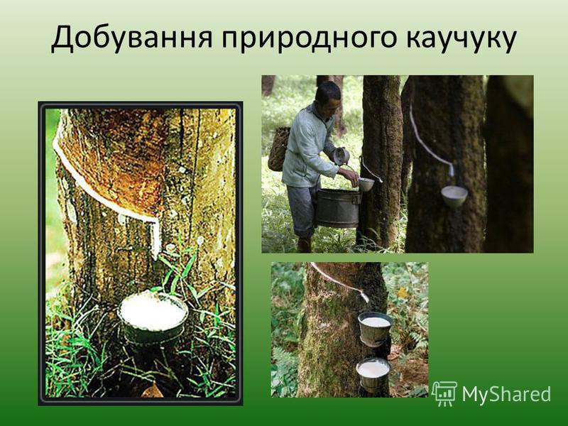 Добування природного каучуку