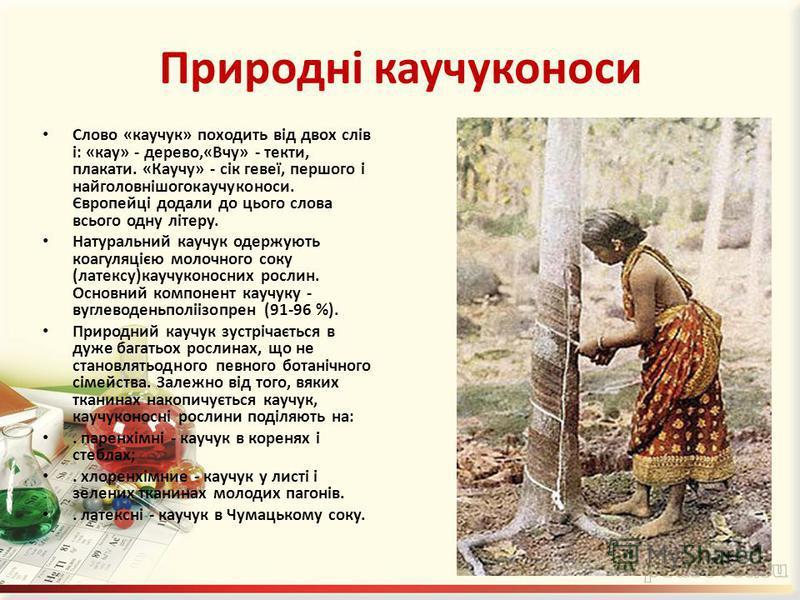 Природні каучуконоси Слово «каучук» походить від двох слів і: «кау» - дерево,«Вчу» - текти, плакати. «Каучу» - сік гевеї, першого і найголовнішогокаучуконоси. Європейці додали до цього слова всього одну літеру. Натуральний каучук одержують коагуляціє