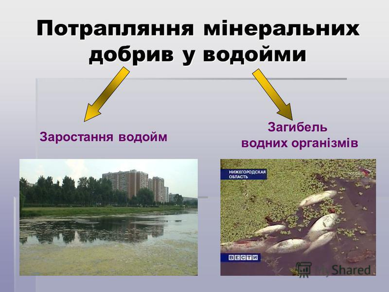 Потрапляння мінеральних добрив у водойми Заростання водойм Загибель водних організмів