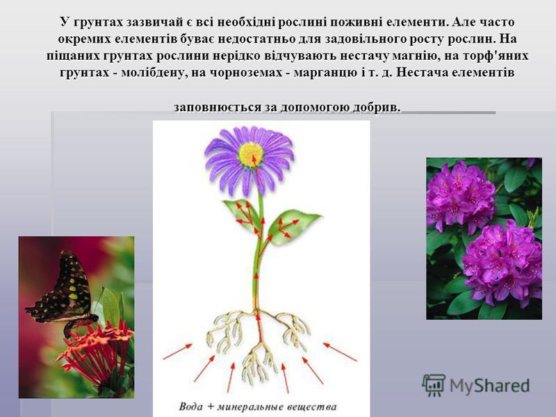 У грунтах зазвичай є всі необхідні рослині поживні елементи. Але часто окремих елементів буває недостатньо для задовільного росту рослин. На піщаних грунтах рослини нерідко відчувають нестачу магнію, на торф'яних грунтах - молібдену, на чорноземах -