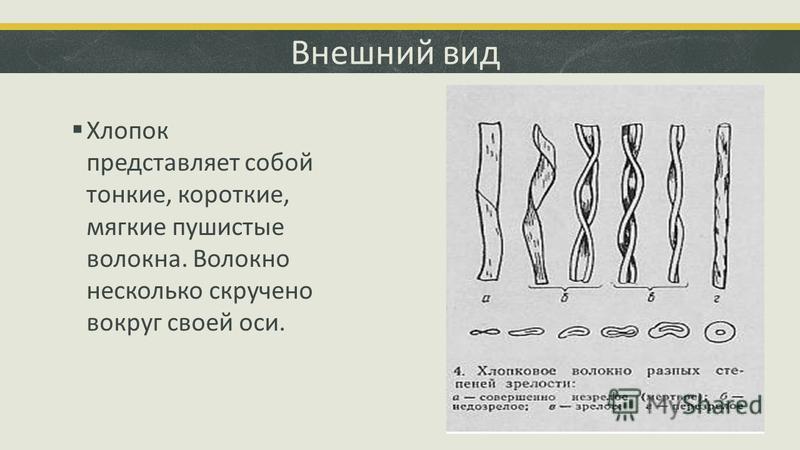 Внешний вид Хлопок представляет собой тонкие, короткие, мягкие пушистые волокна. Волокно несколько скручено вокруг своей оси.
