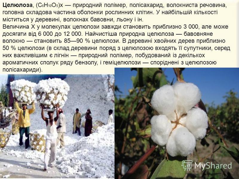 Целюлоза, (С 6 Н 10 О 5 )x природний полімер, полісахарид, волокниста речовина, головна складова частина оболонки рослинних клітин. У найбільшій кількості міститься у деревині, волокнах бавовни, льону і ін. Величина Х у молекулах целюлози завжди стан