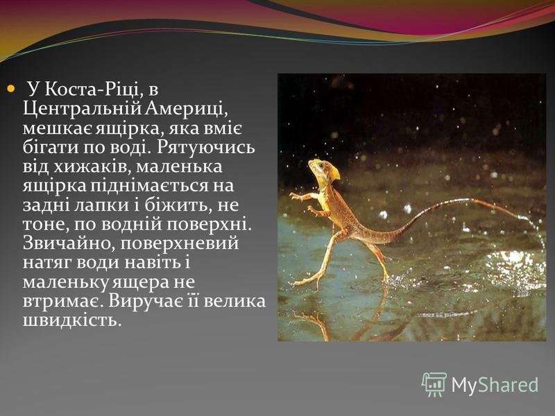 У Коста-Ріці, в Центральній Америці, мешкає ящірка, яка вміє бігати по воді. Рятуючись від хижаків, маленька ящірка піднімається на задні лапки і біжить, не тоне, по водній поверхні. Звичайно, поверхневий натяг води навіть і маленьку ящера не втримає